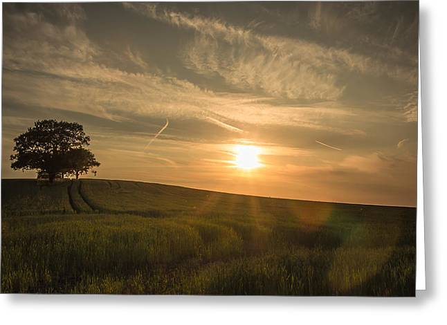 Agricultural Greeting Cards - Sunlight across the crops Greeting Card by Chris Fletcher