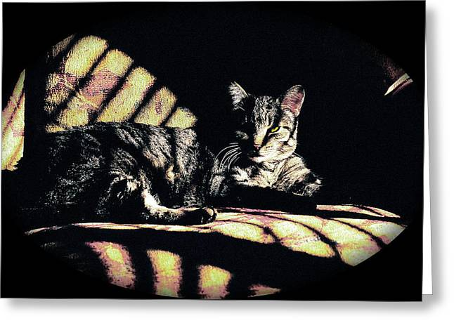 Sunlight and Whiskers Greeting Card by Ronald Hurst