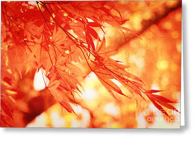 Sunlight Behind Vintage Autumn Leaves Greeting Card by Beverly Claire Kaiya