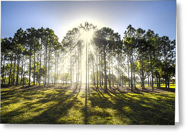 Foggy Beach Greeting Cards - Sunlight in the Trees Greeting Card by Debra and Dave Vanderlaan