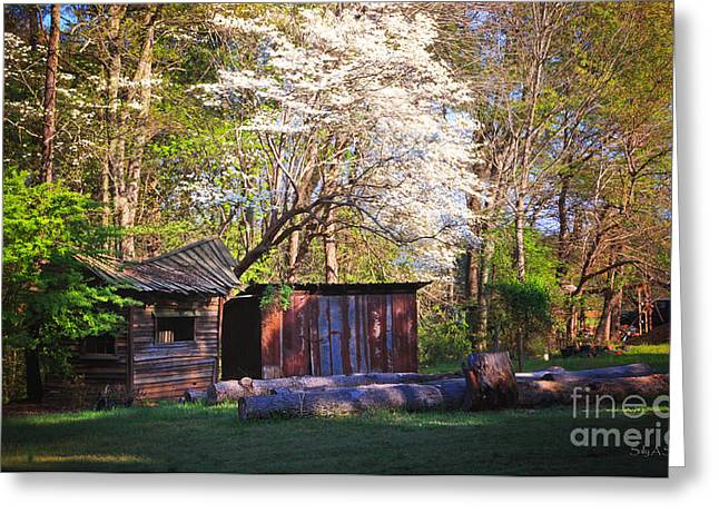 Sunlight On Flowers Greeting Cards - Sunlight On Dogwood Greeting Card by Sally Simon