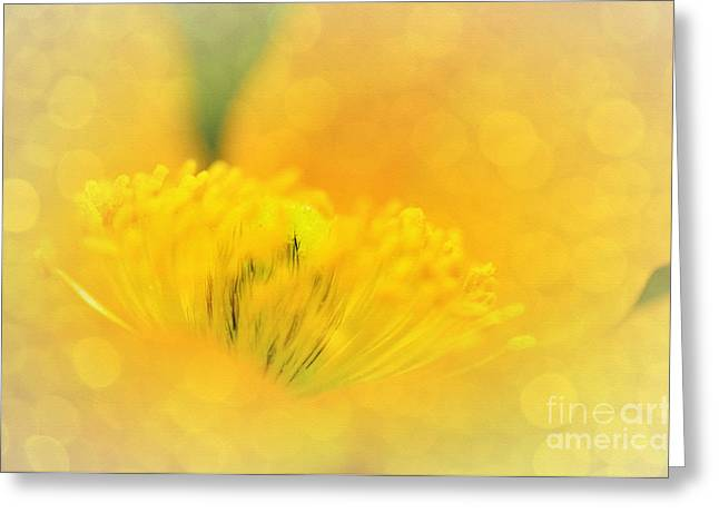 Lemon Art Greeting Cards - Sunlight on Poppy Abstract Greeting Card by Kaye Menner
