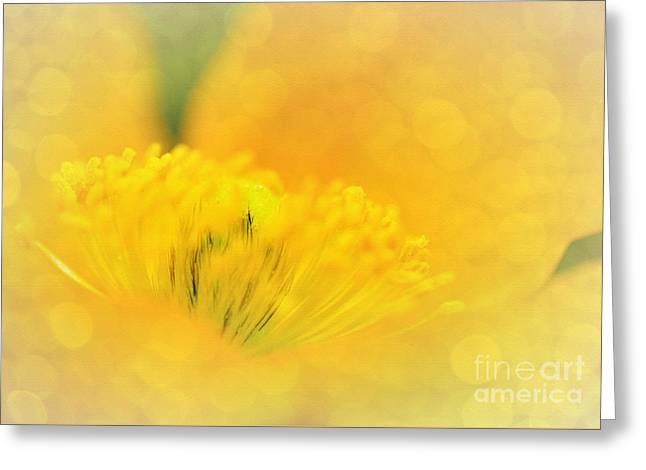 Sunlight On Flowers Greeting Cards - Sunlight on Poppy Abstract Greeting Card by Kaye Menner