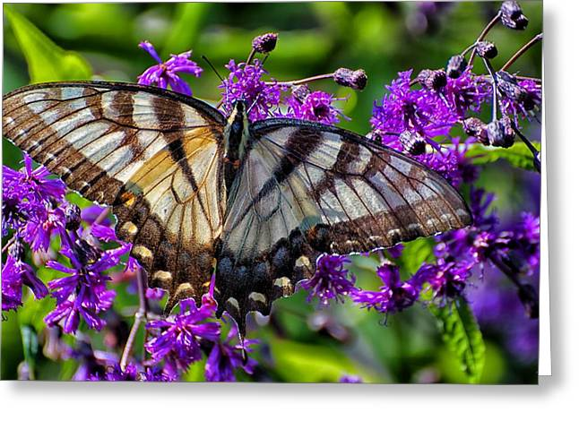 Sunlight On Flowers Greeting Cards - Sunlight on Swallowtail Greeting Card by Beth Akerman