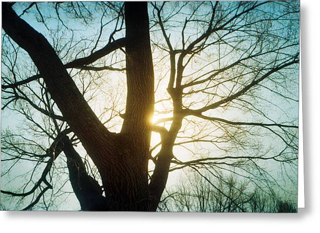 Prospects Photographs Greeting Cards - Sunlight Shining Through A Bare Tree Greeting Card by Panoramic Images