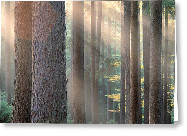Low Section Greeting Cards - Sunlight Shining Through Trees Greeting Card by Panoramic Images