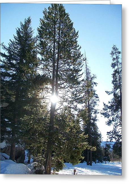Jewel Hengen Greeting Cards - Sunlight Through A Tree Greeting Card by Jewel Hengen