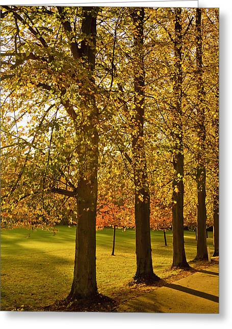 Krista Greeting Cards - Sunlight Through The Trees In Autumn Greeting Card by Kristi Ewert