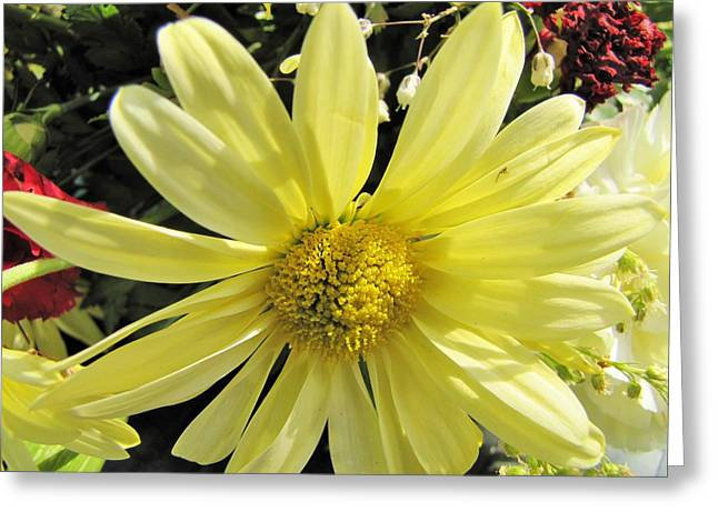 Sunlight On Flowers Greeting Cards - Sunlight thru Petals Greeting Card by Nancy  Hopkins