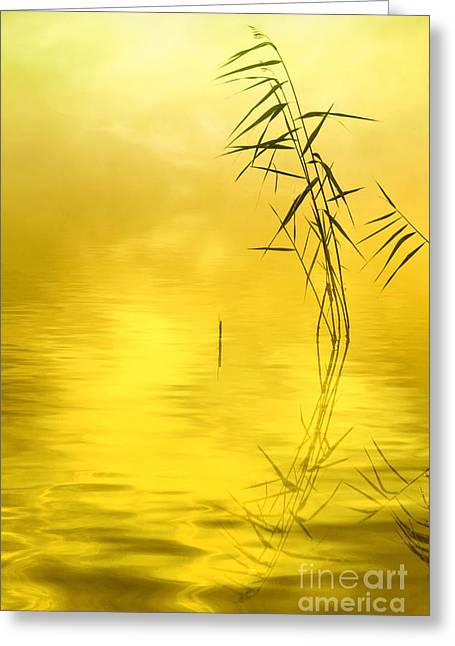 Vertical Abstract Art Greeting Cards - Sunlight Greeting Card by Veikko Suikkanen