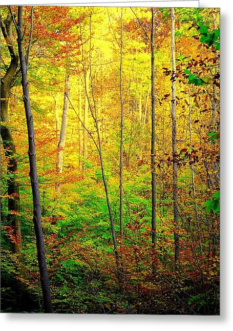 Quite Photographs Greeting Cards - Sunlights Warmth Greeting Card by Frozen in Time Fine Art Photography