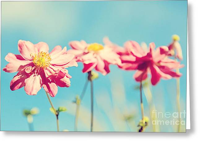 Process Digital Art Greeting Cards - Sunlit Anemone Flowers with Cross Processed Effect Greeting Card by Natalie Kinnear