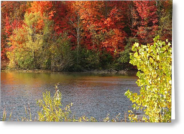 Sunlit Autumn Greeting Card by Ann Horn