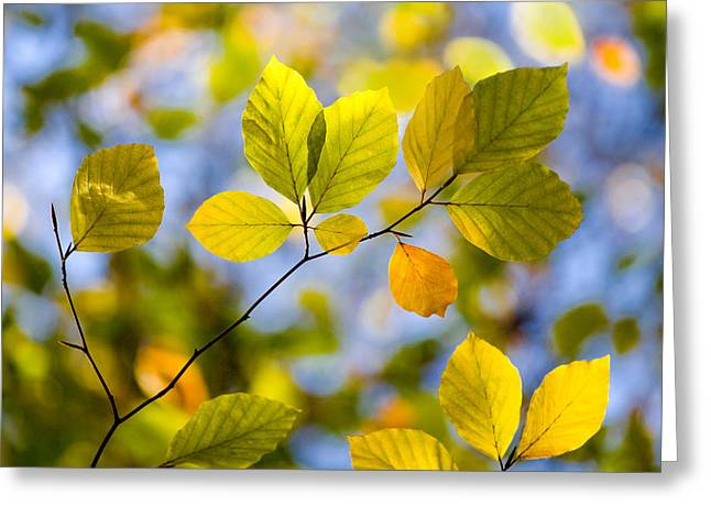 Sun Room Digital Art Greeting Cards - Sunlit Autumn Leaves Greeting Card by Natalie Kinnear
