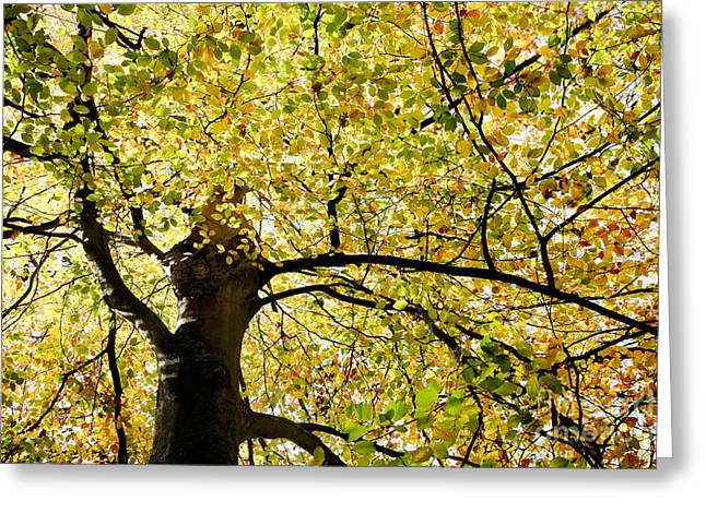 Lounge Digital Art Greeting Cards - Sunlit Autumn Tree Greeting Card by Natalie Kinnear