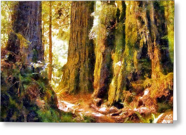 Damnation Greeting Cards - Sunlit Damnation Creek Trail Greeting Card by Kaylee Mason