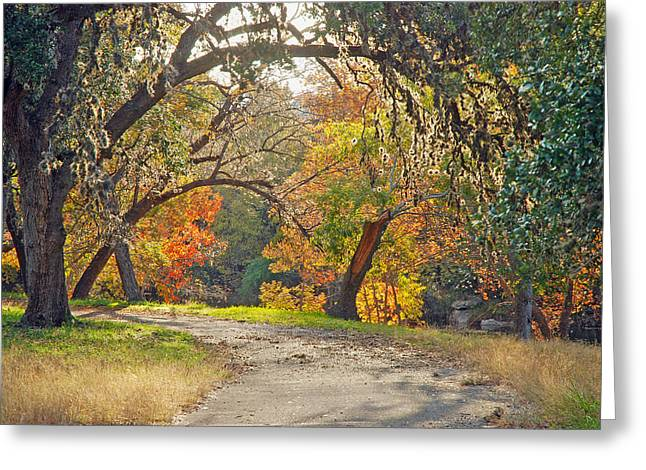 Wimberley Greeting Cards - Sunlit Fall Colors Greeting Card by Robert Anschutz