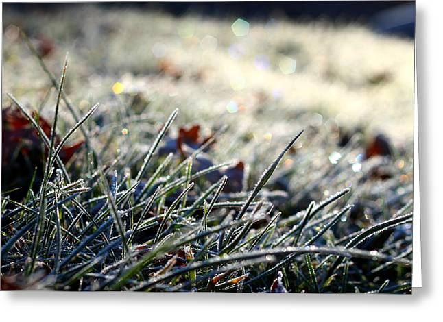 Twinkle Greeting Cards - Sunlit Frost Greeting Card by Saya Studios