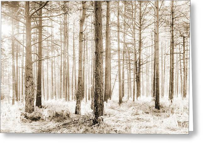 Foliage Photographs Greeting Cards - Sunlit Hazy Trees in Neutral Colors Greeting Card by Natalie Kinnear