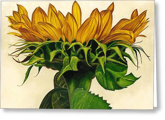 Detail Greeting Cards - Sunlit Greeting Card by Kerri Meehan