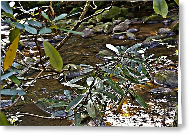 Reflections Of Trees In River Greeting Cards - Sunlit Mountain Laurel Greeting Card by JW Hanley