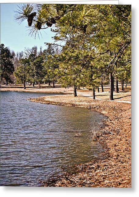 Sunlit Pine Trees On The Shoreline Greeting Card by Greg Jackson