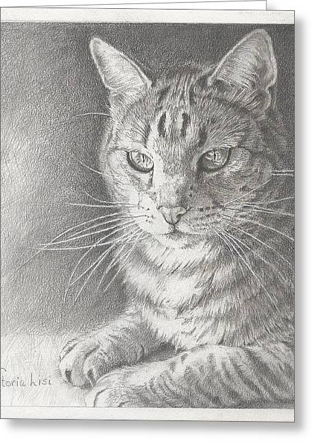 Contemplative Drawings Greeting Cards - Sunlit Tabby Cat Greeting Card by Victoria Lisi