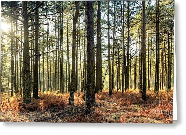 Stream Digital Greeting Cards - Sunlit Trees on the Ashdown Forest Greeting Card by Natalie Kinnear