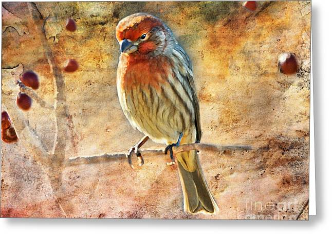 House Finch Greeting Cards - Sunning Greeting Card by Betty LaRue