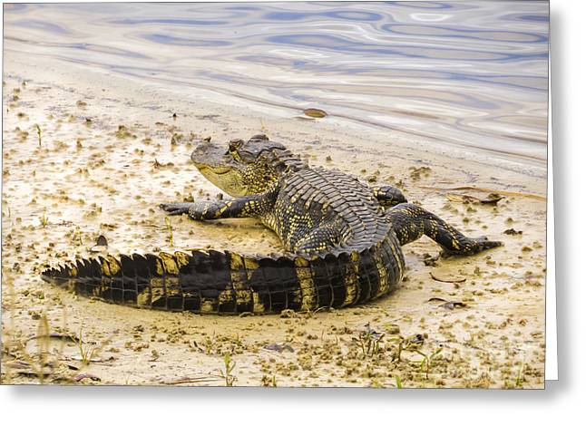 Sunning On The Shore Greeting Card by Zina Stromberg