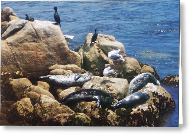 California Sea Lions Greeting Cards - Sunning Seals Greeting Card by Pharris Art