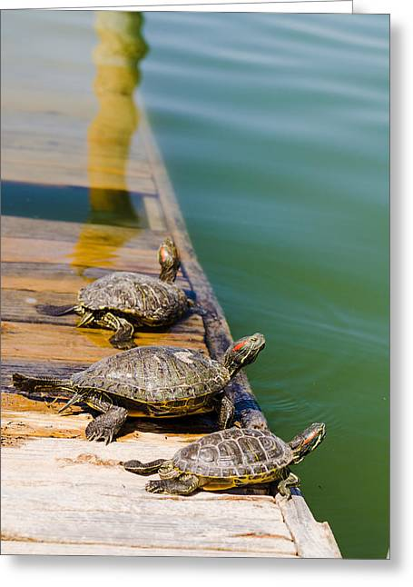 Snapper Greeting Cards - Sunning Snappers Greeting Card by Chris Ann Wiggins