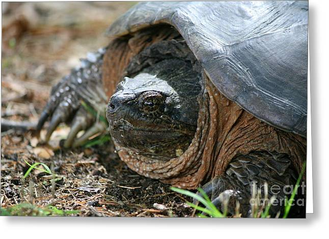 Wildlife Photos Greeting Cards - Sunning Snapping Turtle Greeting Card by Neal  Eslinger