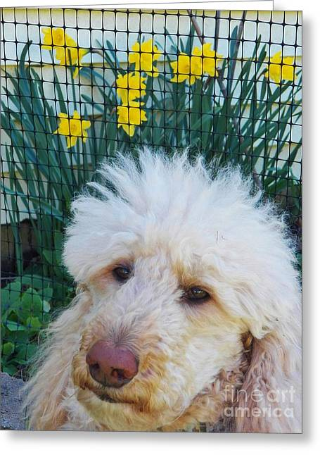 Sunny And The Daffodils Greeting Card by Judy Via-Wolff