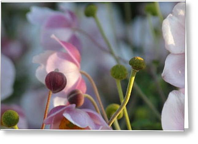 Floral Digital Art Digital Art Greeting Cards - Sunny Anemones Greeting Card by France Laliberte