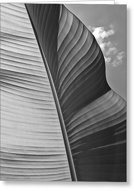Nature Greeting Cards - Sunny Banana Leaf In Black And White Greeting Card by Eva Kondzialkiewicz
