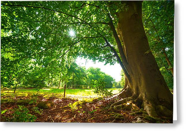 Alejandro Greeting Cards - Sunny Beech Tree Greeting Card by Alejandro Quezada