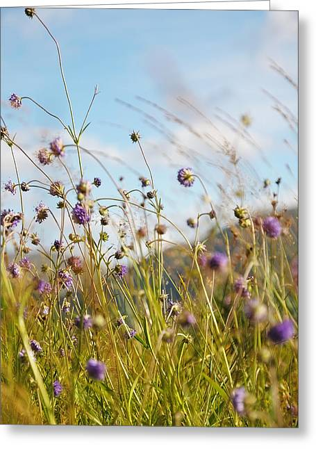 Spiritual Art Photos Greeting Cards - Sunny Bliss. Rest and Be Thankful. Scotland Greeting Card by Jenny Rainbow