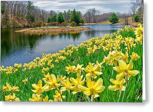 New England Landscape Greeting Cards - Sunny Daffodil Greeting Card by Bill  Wakeley