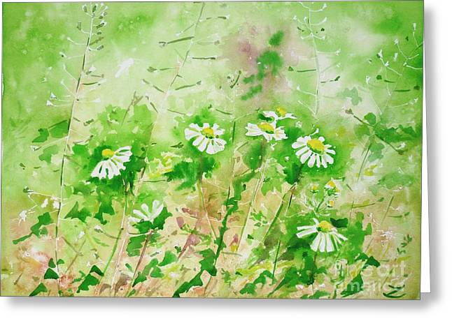 Sunny Daisies Greeting Card by Zaira Dzhaubaeva