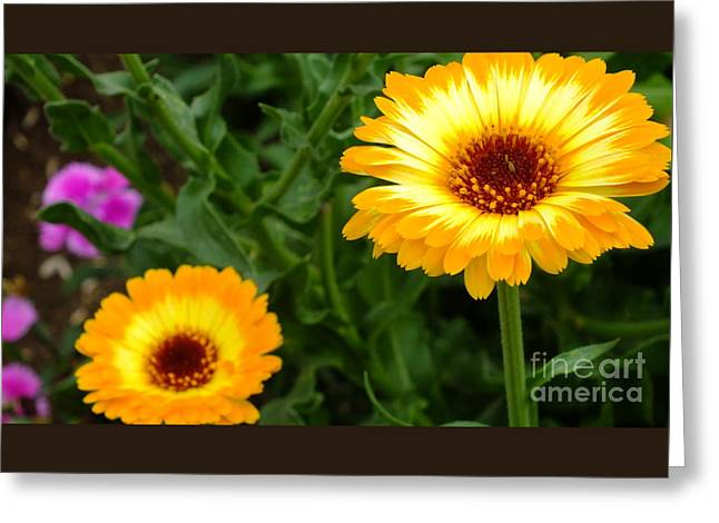 Shower Curtain Greeting Cards - Sunny day Greeting Card by Chandra Nyleen