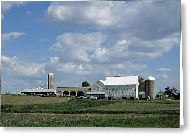 Cattle-shed Greeting Cards - Sunny Days Greeting Card by Mountain Dreams