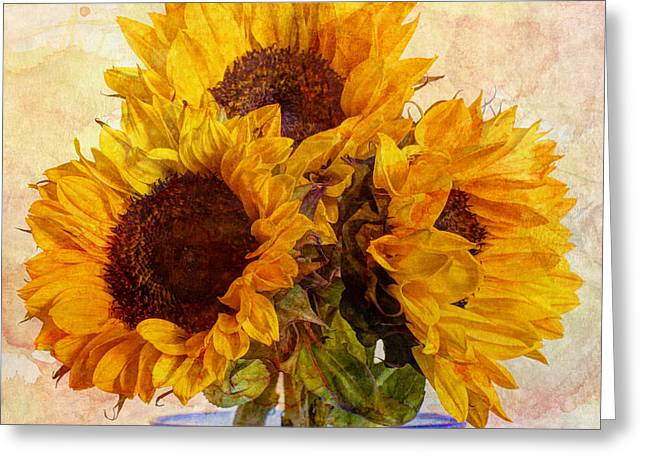 Trio Greeting Cards - Sunny Delight Greeting Card by Heidi Smith