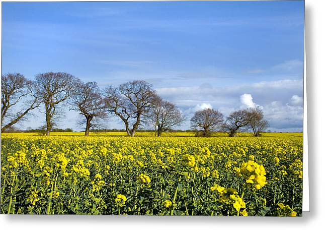 Paul Lilley Greeting Cards - Sunny Delight Greeting Card by Paul Lilley