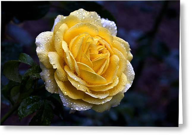 Bud Glass Art Greeting Cards - Sunny Greeting Card by Doug Norkum