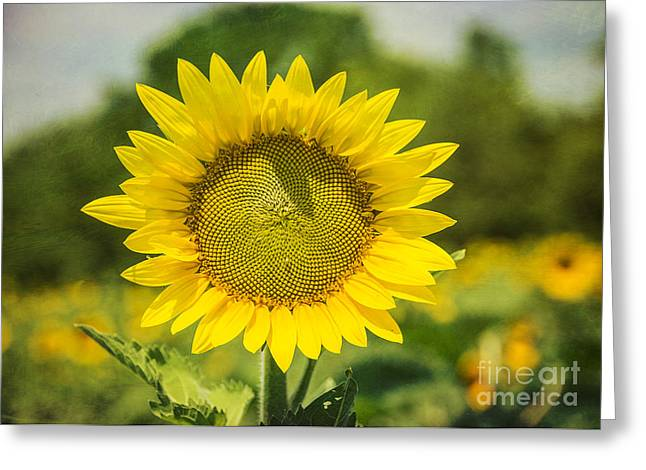 Valuable Greeting Cards - Sunny Face Greeting Card by Terry Rowe