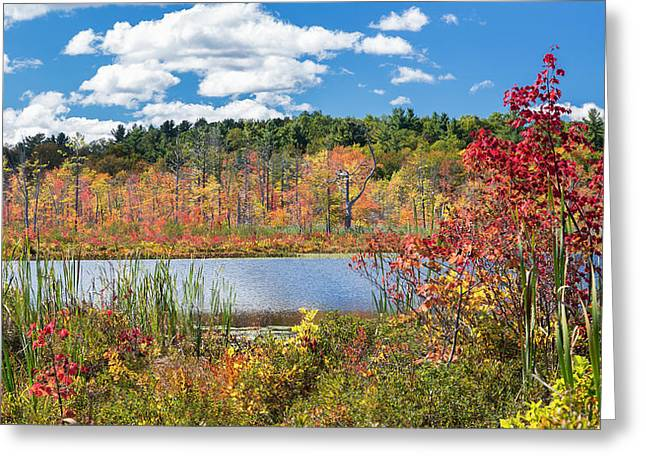 Sunny Fall Day Greeting Card by Bill Wakeley