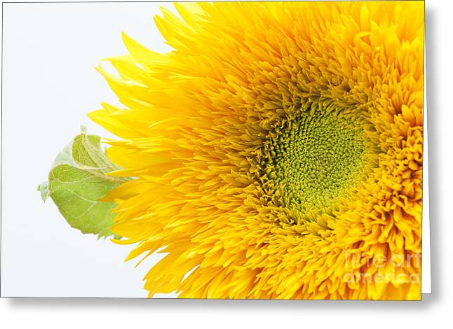 Sunny Flower Greeting Card by Anne Gilbert