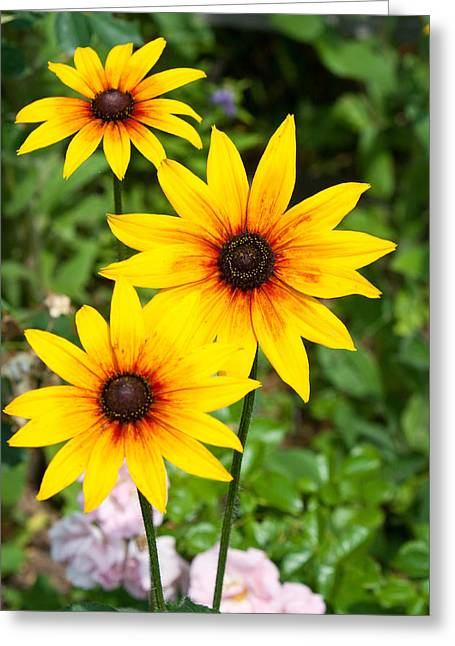 Coller Greeting Cards - Sunny Flowers Greeting Card by Debbie Hamilton