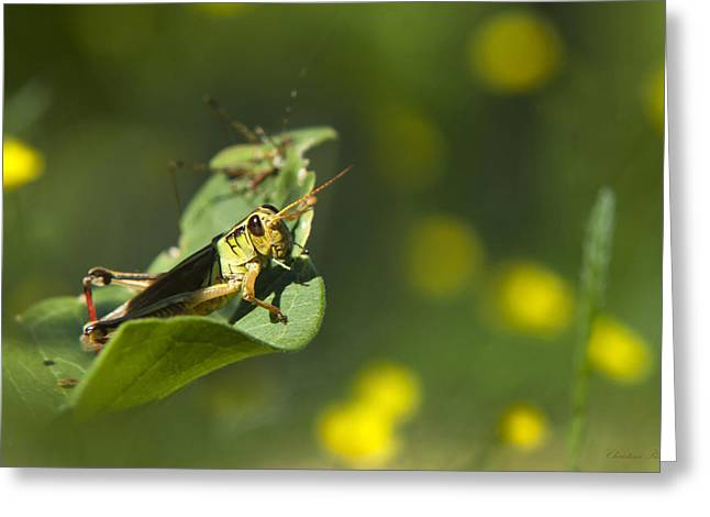 Sunny Green Grasshopper Greeting Card by Christina Rollo